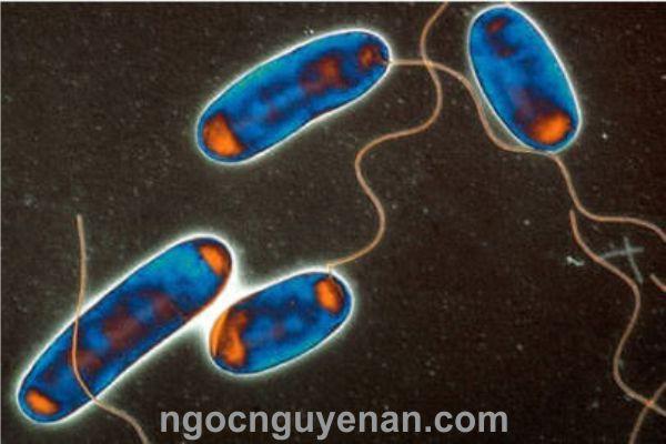bơm định lượng Clo dioxit tiêu diệt Legionella